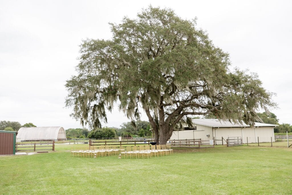rows of white and gold chairs under large oak tree for wedding ceremony with white barn in background